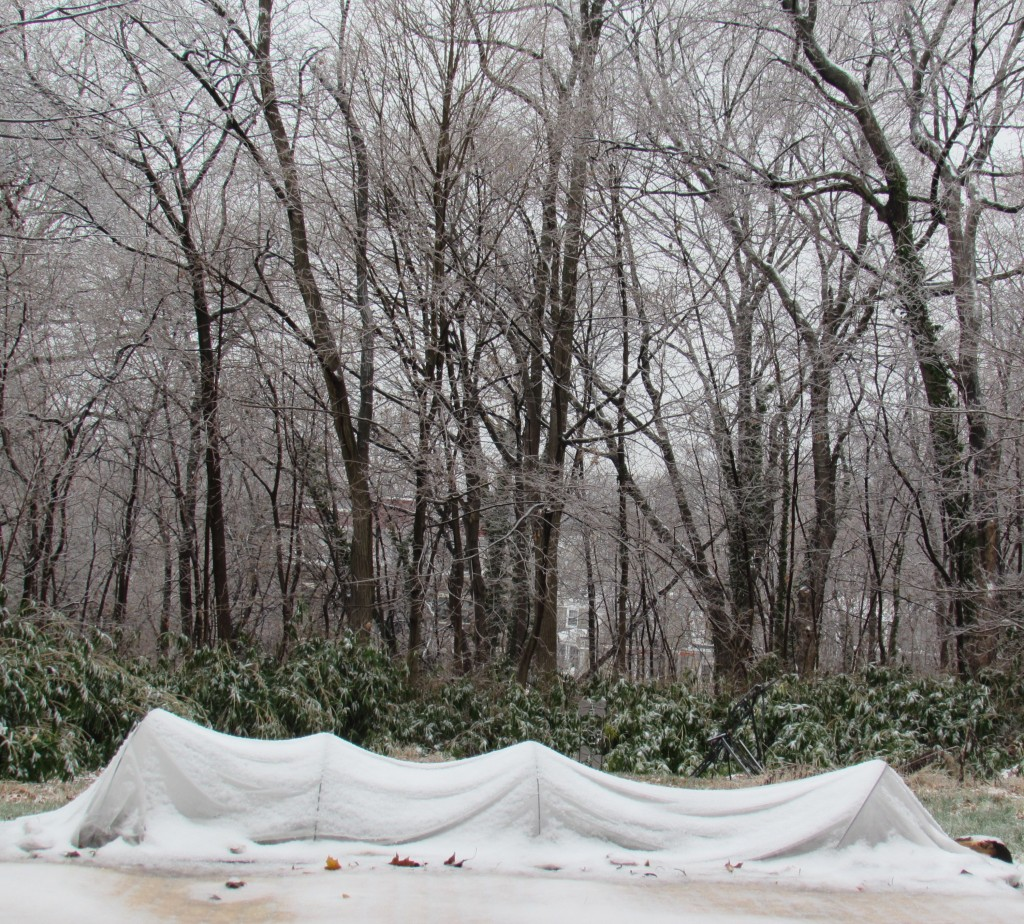 The row cover on my winter garden, Dec. 17, 2016